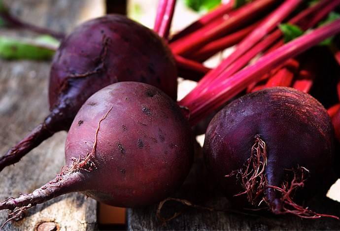 Раннеспелый сорт свеклы водан f1: описание и применение, выращивание и хранение, болезни и вредители