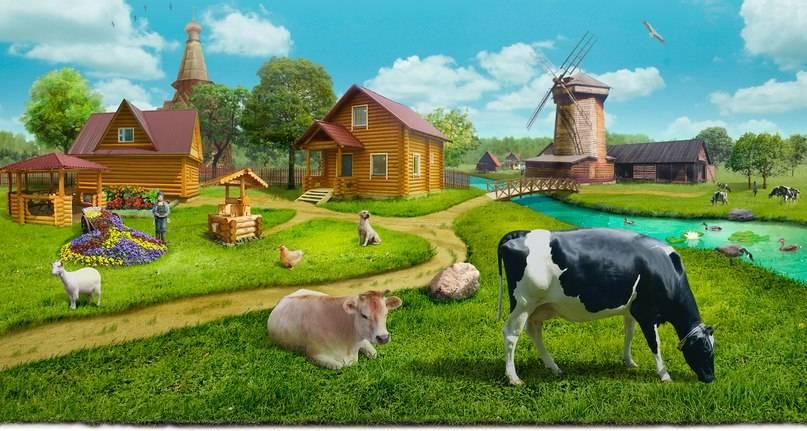 Особенности содержания свиней в подсобном хозяйстве