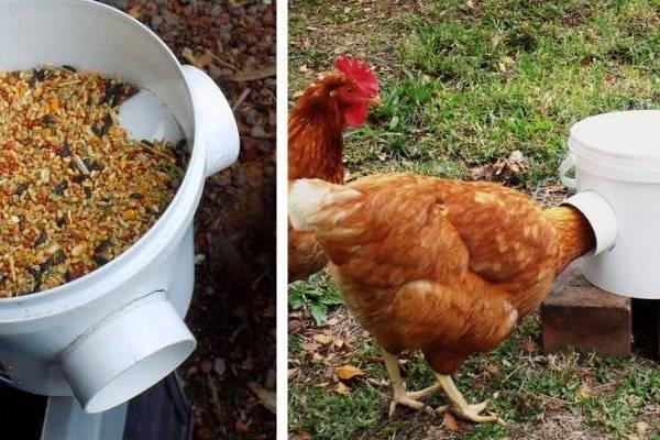 Кормушки для кур: виды, тонкости выбора и изготовление
