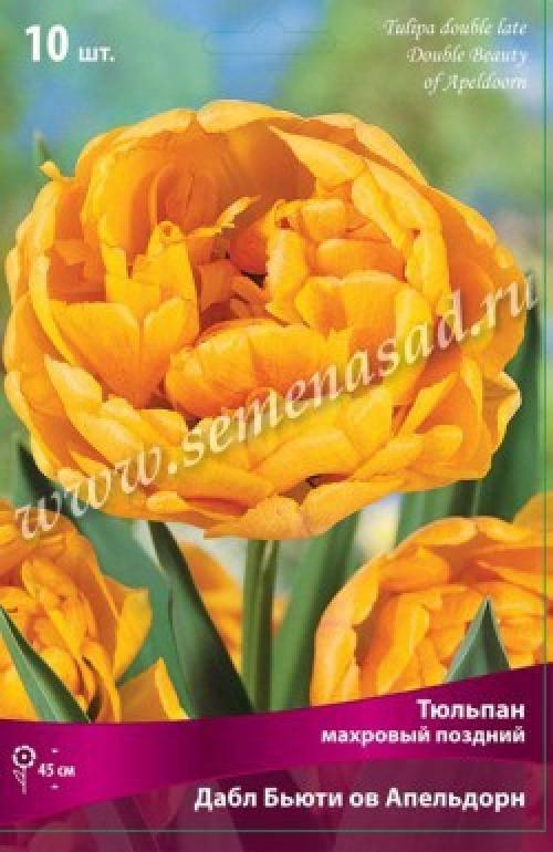 Тюльпаны — дарвиновы гибриды.