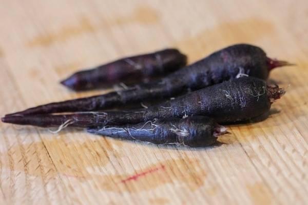 Какими болезнями поражается морковь, как от них избавиться и не допустить возвращения?