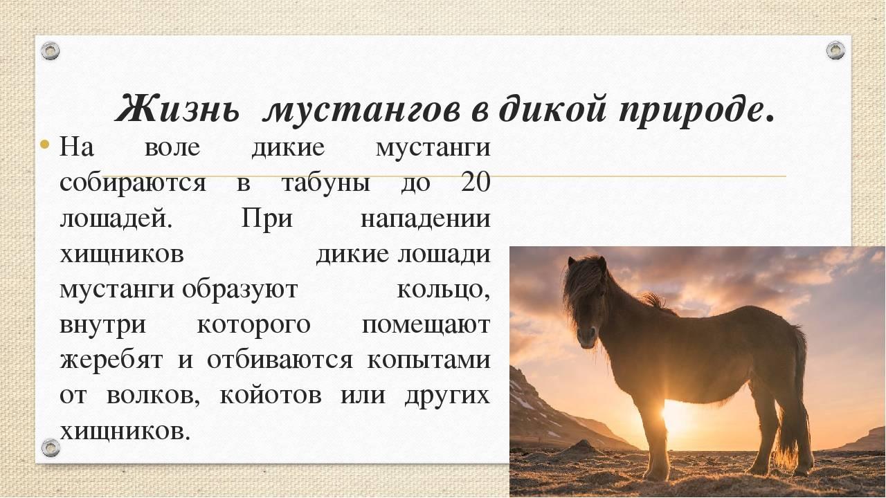 Как можно определить возраст лошади и что влияет на продолжительность жизни
