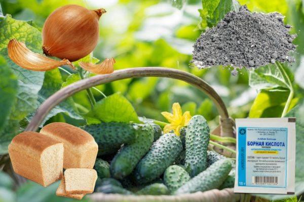 Внекорневая подкормка огурцов – самые лучшие рецепты