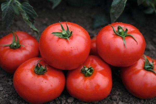 Описание сорта томата валя, его характеристика и урожайность