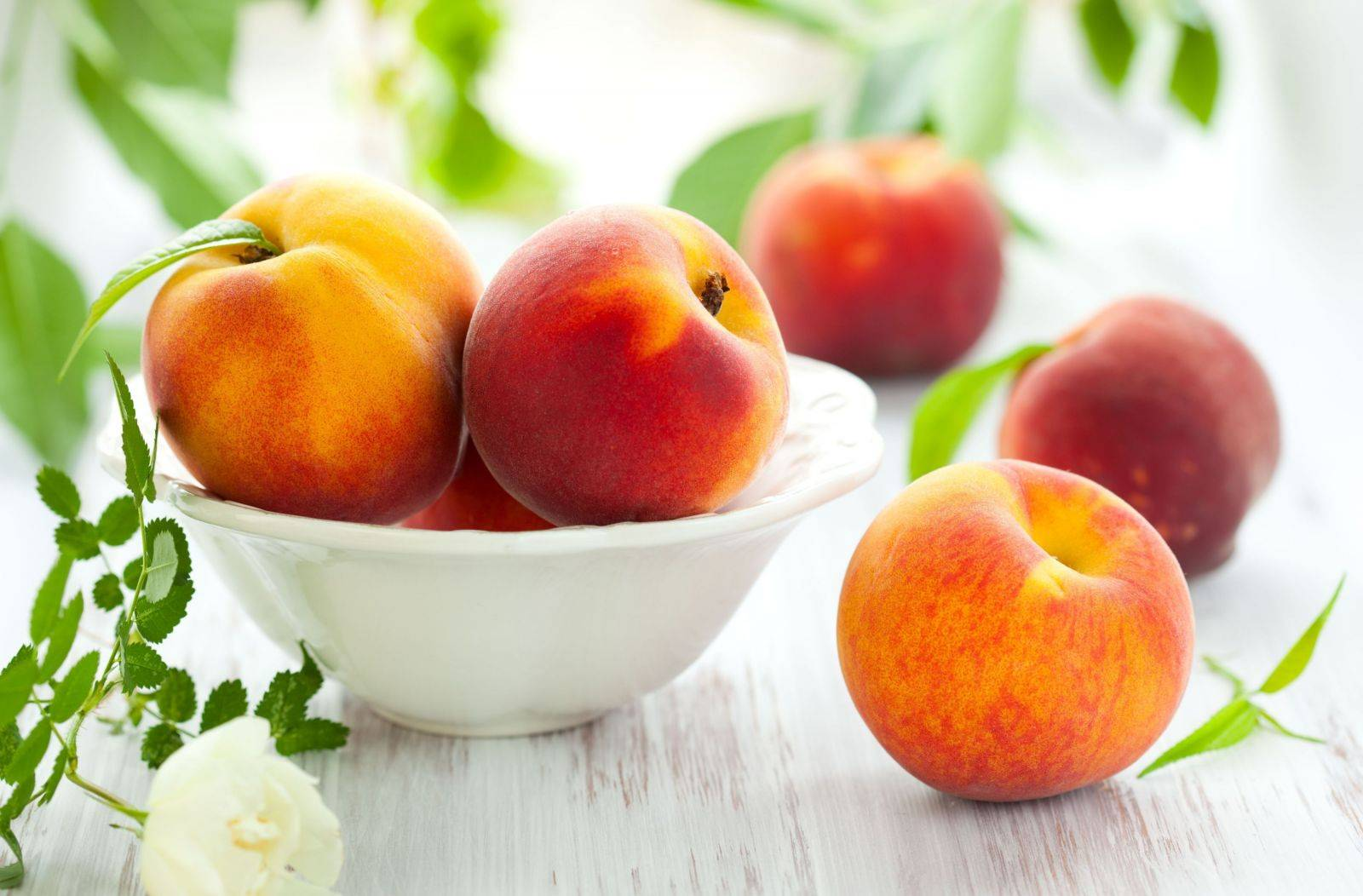 Эффективные меры борьбы с вредителями и болезнями персика
