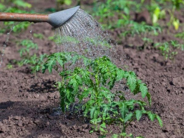 Как использовать перекись водорода для семян и растений