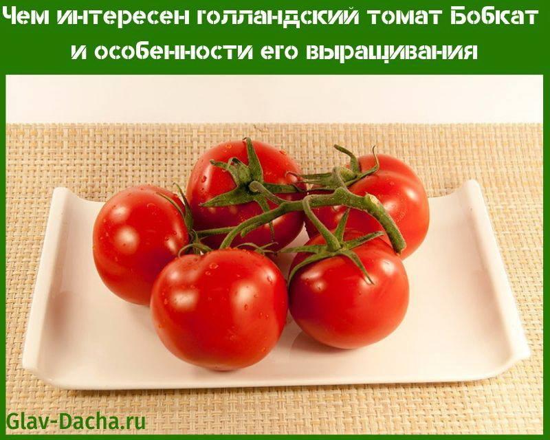 Сортовая характеристика томатов бенито