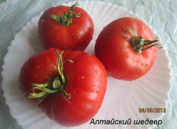 Сортовая характеристика томата бетта