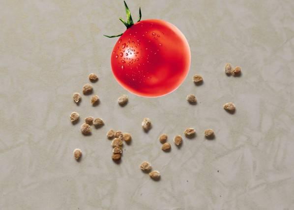 Как правильно сеять семена помидор на рассаду дома