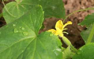 Применение калиевой селитры для сада и огорода