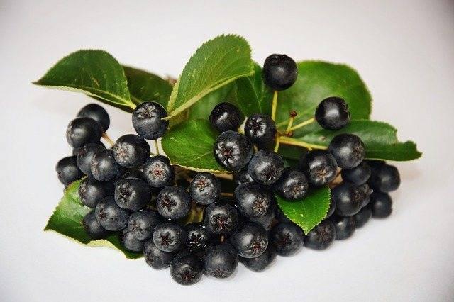 Заготовки из черноплодной рябины на зиму