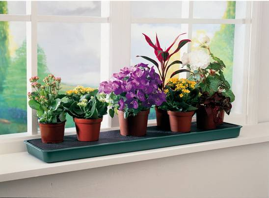 Мошки в комнатных цветах — как избавиться
