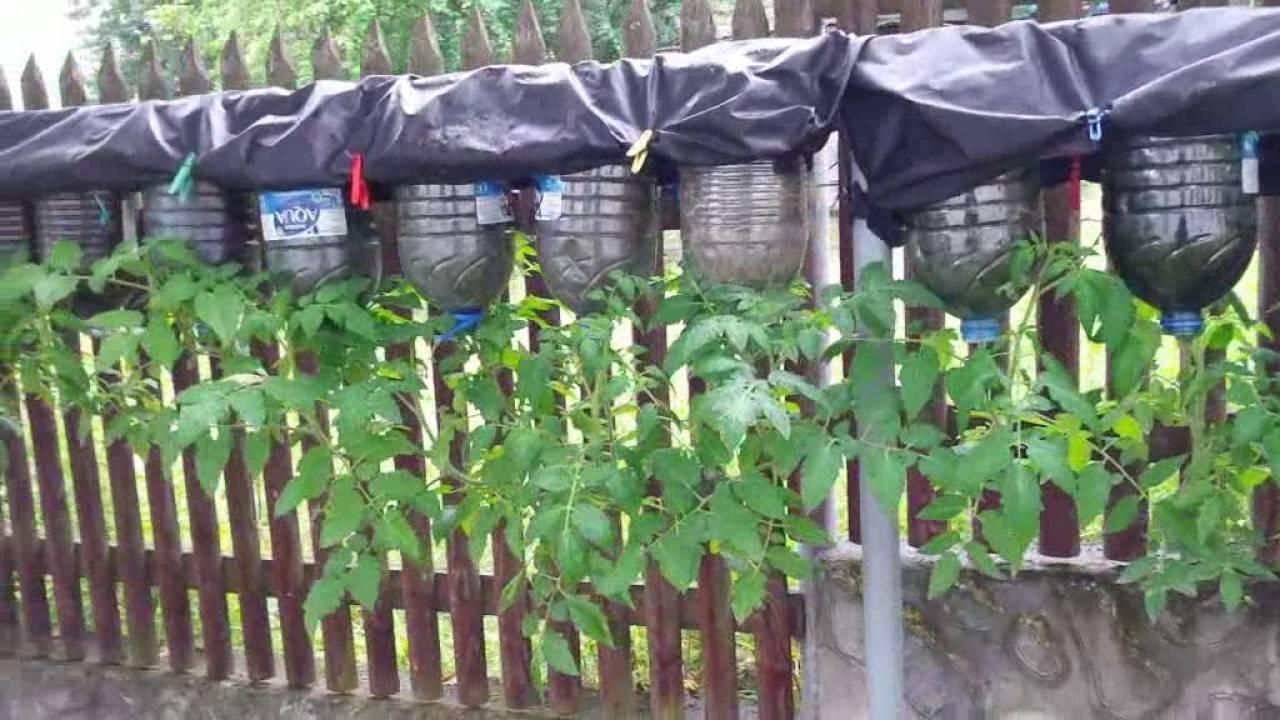 Выращиваем огурцы на балконе (фотоинструкция)