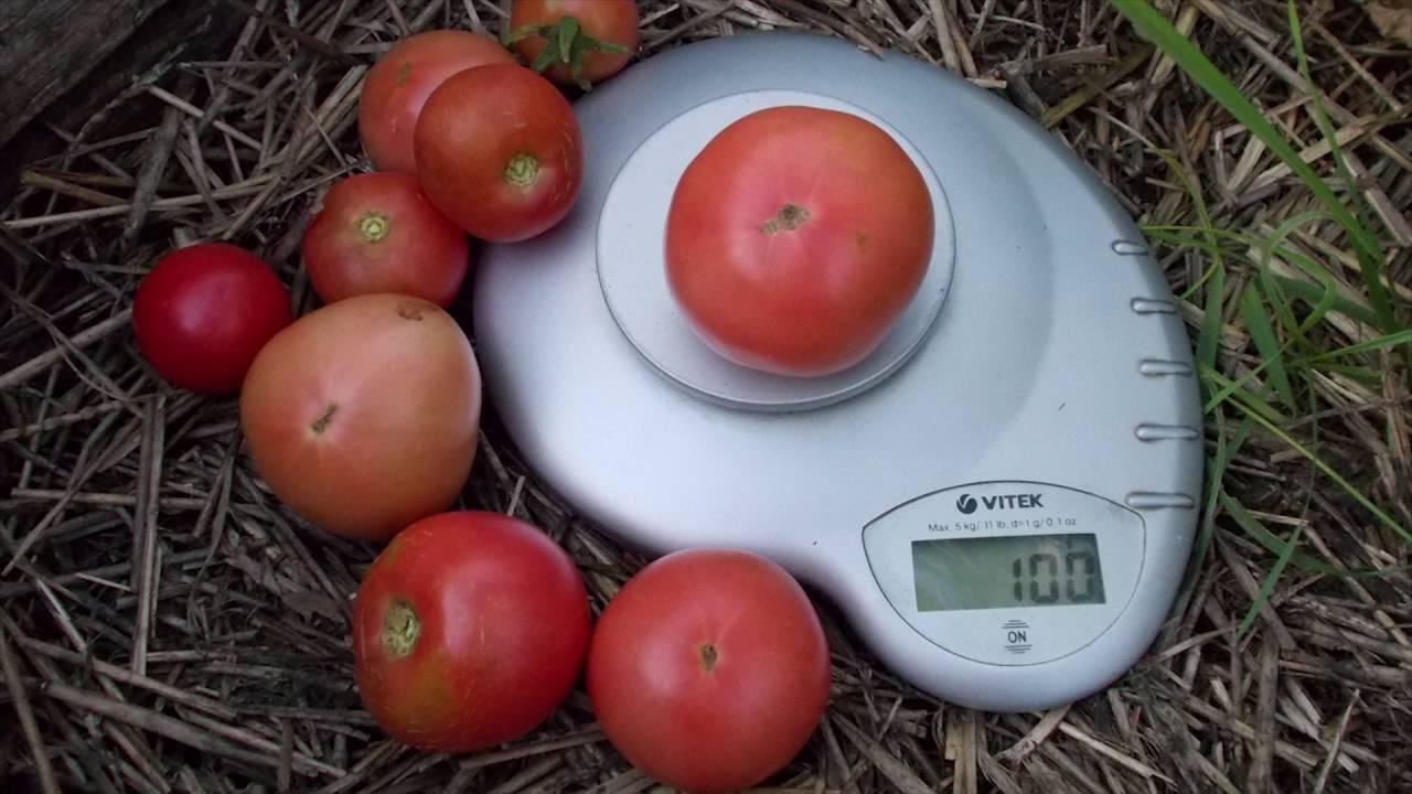 Характеристика и описание сорта томата малиновка