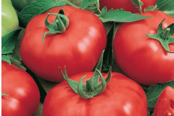 Описание сорта томата Игранда и его характеристика