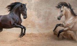 Самая быстрая лошадь в мире: мощность, которая неподвластна человеку