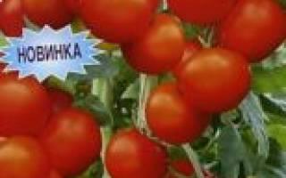 Сорт с обильными плодами — томат фляшентоматен: описание помидоров и характеристики