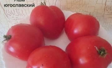 Характеристика и описание томата «азоюшка»