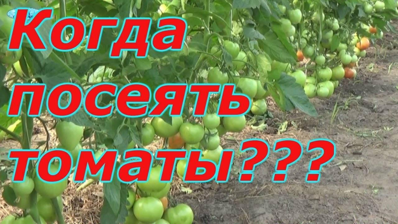 Сроки, когда сажать томаты на рассаду для Подмосковья