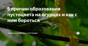 Избавляемся от пустоцвета на огурцах эффективными народными средствами
