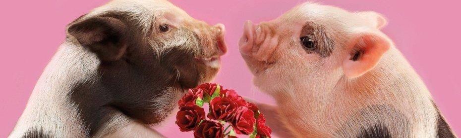 Когда резать свинью после гуляния