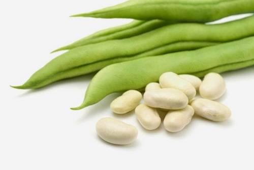 Фасоль белая: полезные свойства и противопоказания