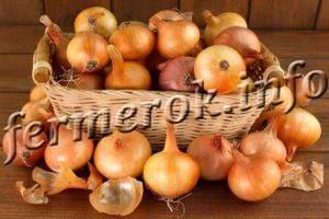 Лук геркулес: описание сорта, фото, отзывы, посадка и уход, достоинства и недостатки, особенности выращивания