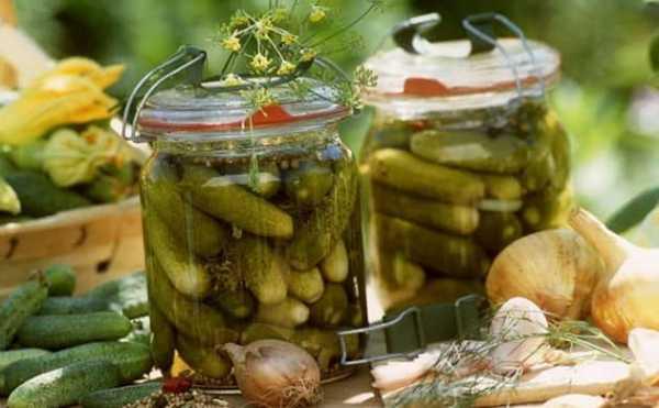 Огурцы в огурцах на зиму — 6 рецептов приготовления в банках