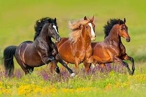 Сколько в среднем живут лошади