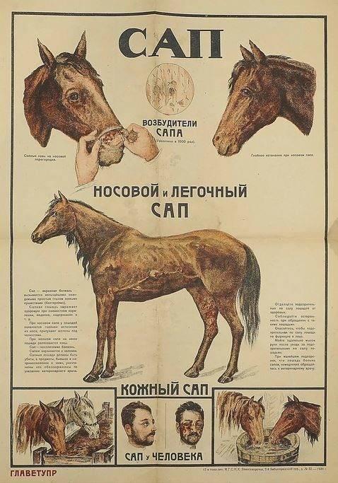 Симптомы и лечение лептоспироза у лошадей