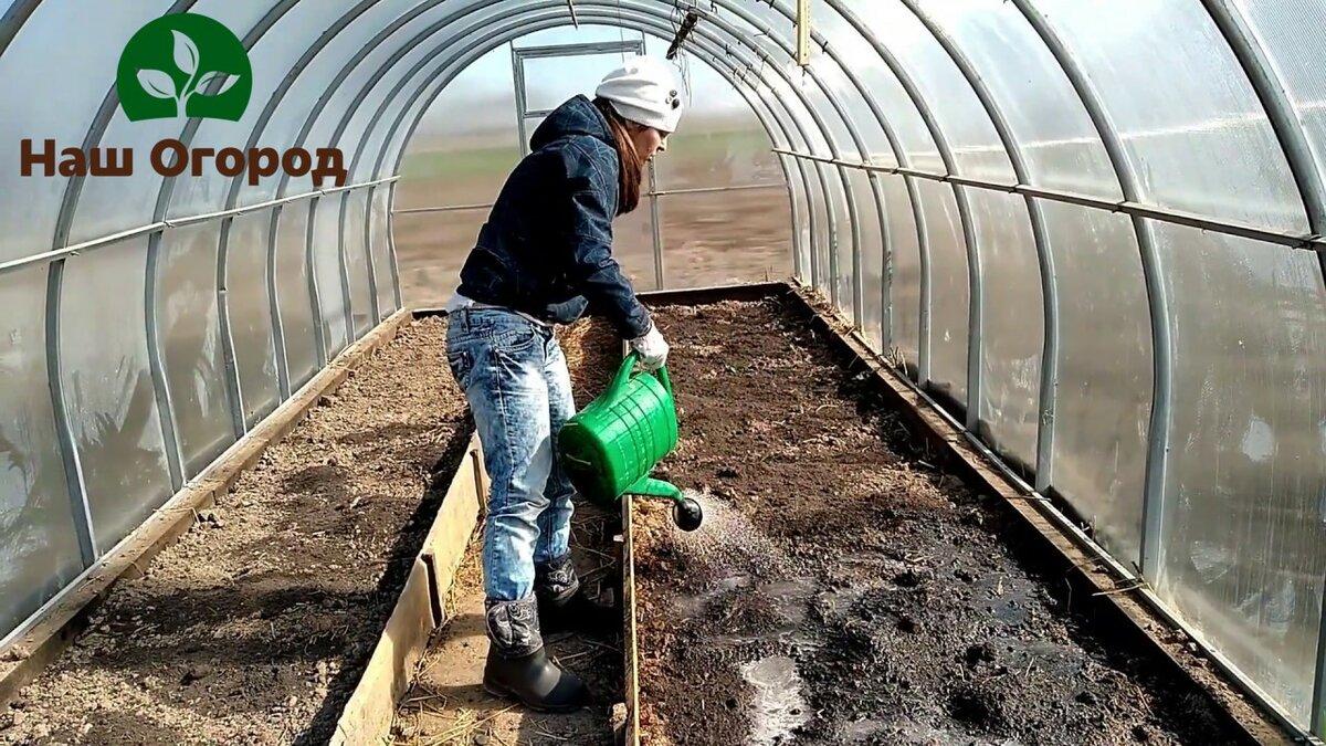 Как подготовить почву для томатов в теплице весной