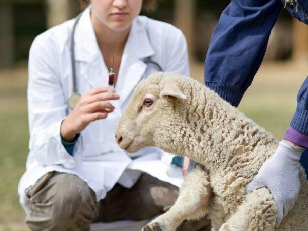 Скрепи овец