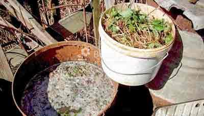 Дрожжевая подкормка огурцов – рецепт, как приготовить, отзывы
