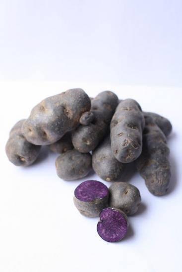 Особенности фиолетовых (синих) сортов картофеля