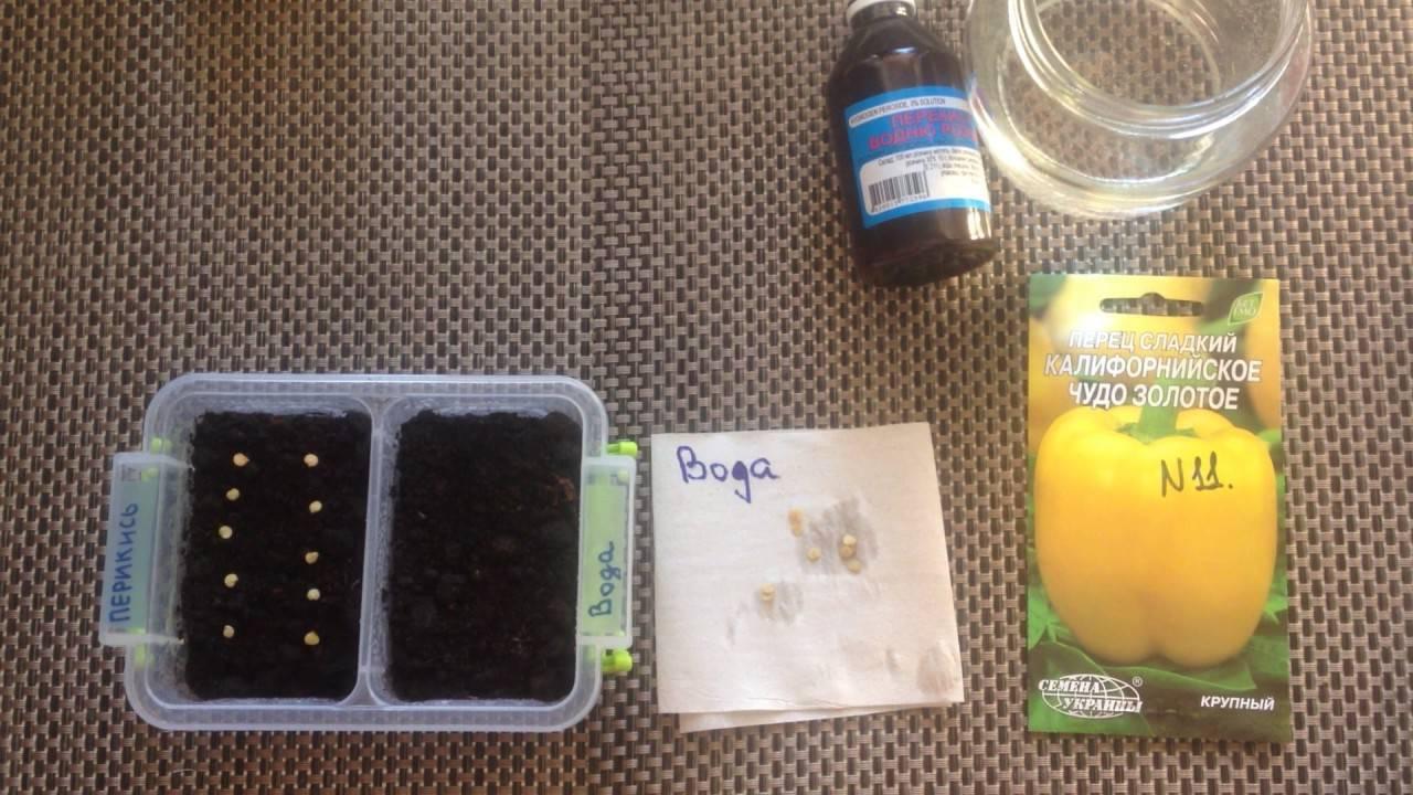 Замачивание семян в перекиси водорода перед посадкой