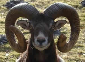 Муравьед – самый языкатый зверь на земле