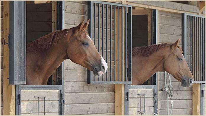 Сумма содержания лошади в месяц