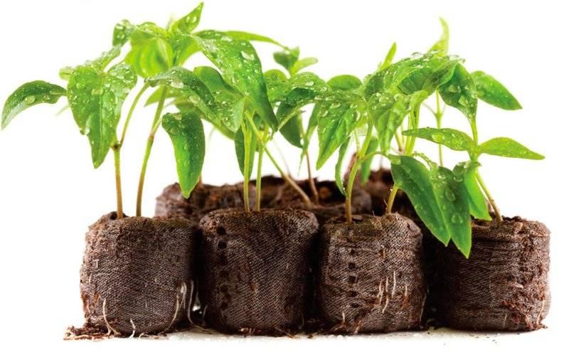 Нашатырный спирт как удобрение для растений: применение, обработка растений нашатырем