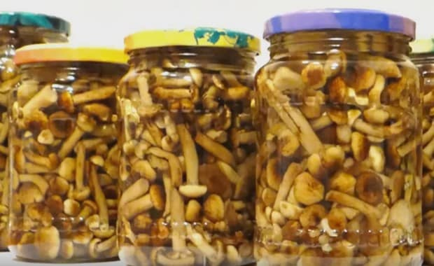 Маринованные опята на зиму самые вкусные — рецепты приготовления в домашних условиях