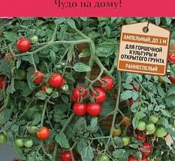 Томат дачник — сорт для занятых огородников