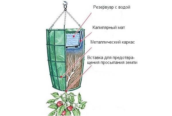Как вырастить помидоры в бочке?