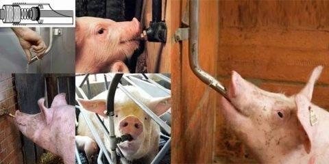 Виды и требования к поилкам для свиней, как сделать своими руками и установка