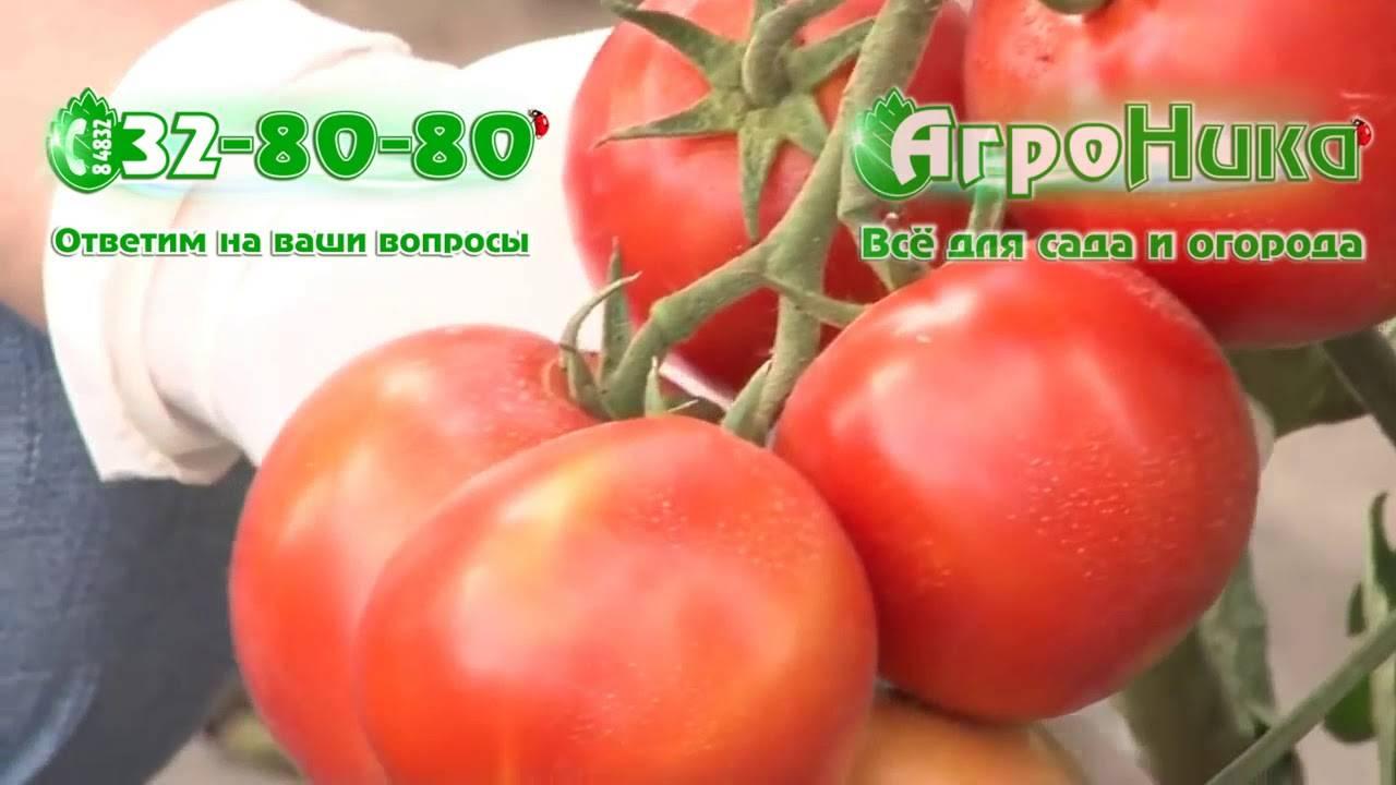 Особенности и описание сорта национальных томатов: выращиваем «русский размер» f1