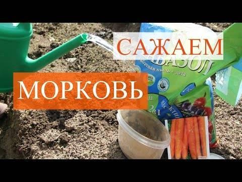 5 способов посеять морковь: проверенные методы от наших читателей