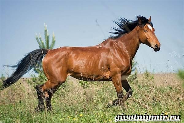 Масти лошадей, названия и фото: каурый, буланый, вороной