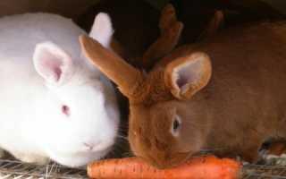 Можно ли давать кроликам кукурузу и в чем ее польза для животных
