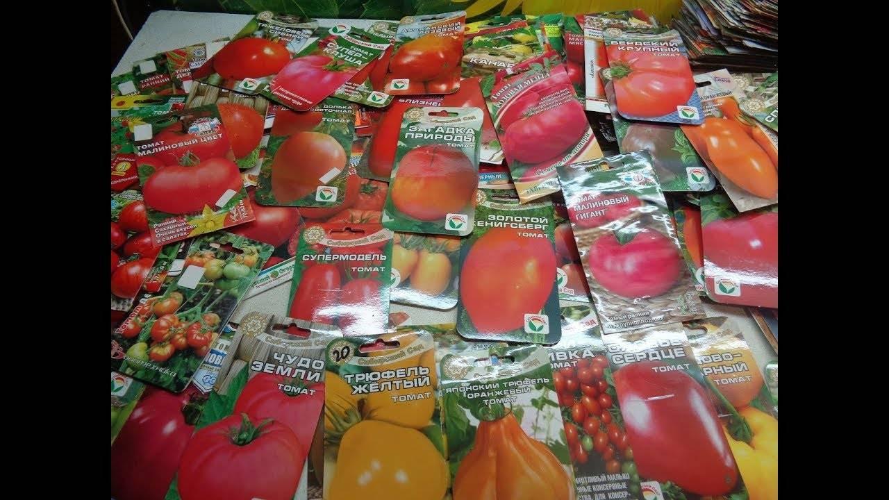 Томат голландской селекции шеди леди f1: описание, тонкости агротехники, отзывы о гибриде