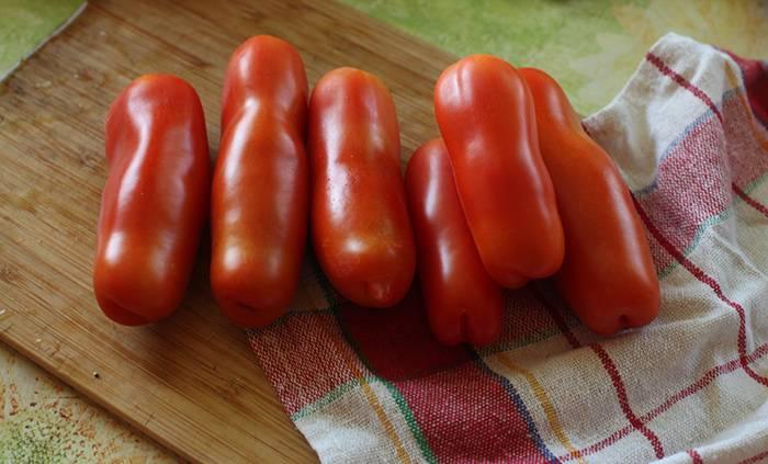 Сорт томата жигало