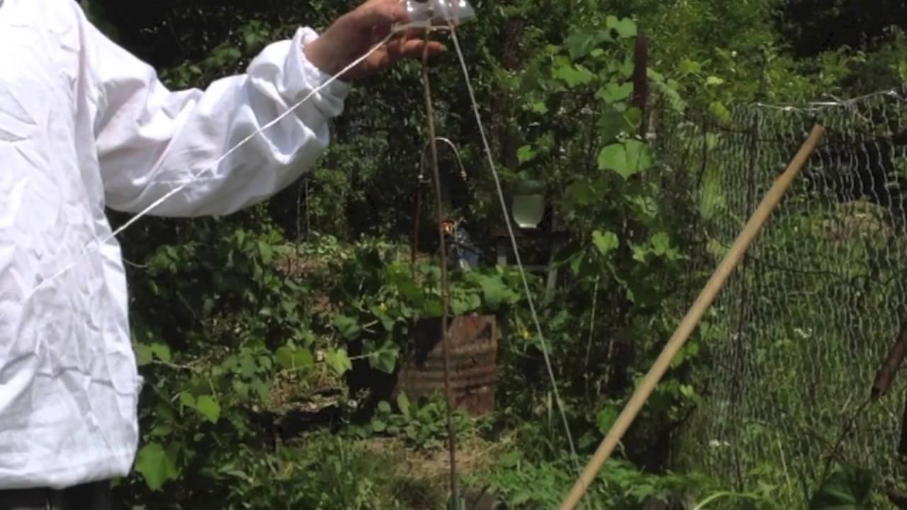 Как вырастить огурцы в бутылках – пошаговый мастер-класс с фото