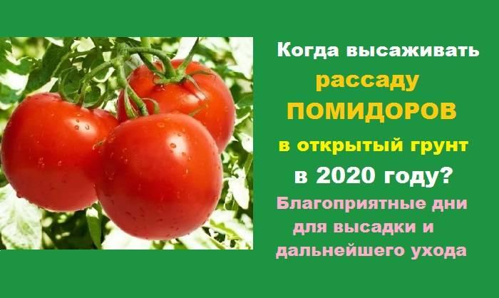 Благоприятное время посадки помидоров на рассаду в 2019 году